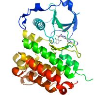 Crizotinib (Xalkori) Mechanism of Action