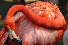 220px-Lightmatter_flamingo2